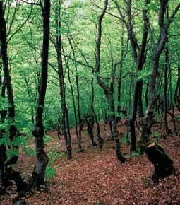 AtlasForestal_CastillayLeon_Bloque2_Página_155_Imagen_0002