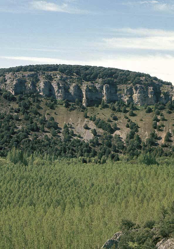 Tomo+II.+Futuro+de+los+bosques+y+Mapa+Forestal+_Página_042_Imagen_0001