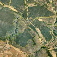 Tomo+II.+Futuro+de+los+bosques+y+Mapa+Forestal+_Página_081_Imagen_0001