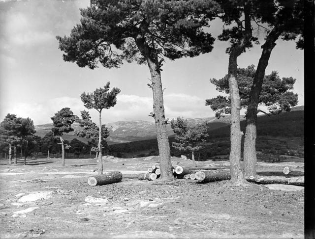 Covaleda. Waldlichtung & Berge [Calvero con troncos cortados sob